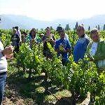 Enoturismo en Uruguay, la oportunidad de disfrutar de lo mejor de la cultura del vino