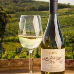Los vinos más populares del Uruguay