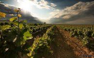 Las bodegas en la tradición vinícola en Uruguay