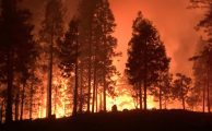 Incendio Forestal EEUU